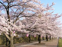 Shibukawa1